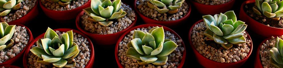SURVEY: Do you keep houseplants in your home?